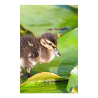 Brown duckling walking on water lily leaves stationery