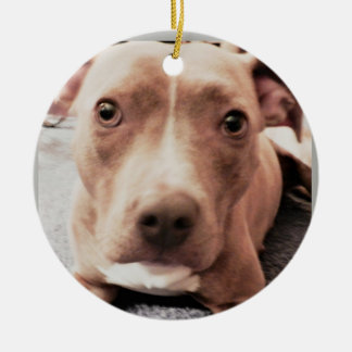 BROWN EYED PIT DOG ornament
