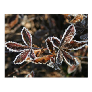 Brown Frosty Leaves Postcard