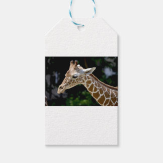 Brown Giraffe during Daytime Gift Tags