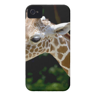 Brown Giraffe during Daytime iPhone 4 Case-Mate Case