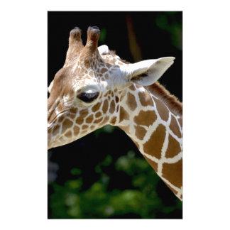 Brown Giraffe during Daytime Stationery