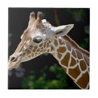 Brown Giraffe during Daytime Tile