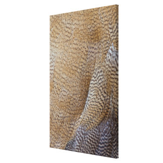 Brown Goose Feather Abstract Canvas Print