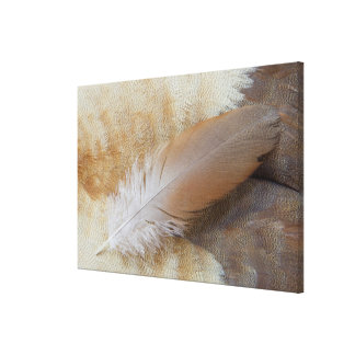 Brown Goose Feather Still Life Canvas Print