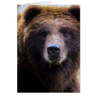 Brown Grizzly Bear Note Card