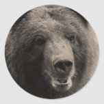 Brown Grizzly Bear Wildlife Photo Round Sticker
