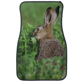 Brown Hare, Lepus europaeus, young eating, Floor Mat