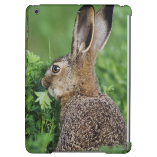 Brown Hare, Lepus europaeus, young eating, iPad Air Covers