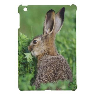 Brown Hare, Lepus europaeus, young eating, iPad Mini Case