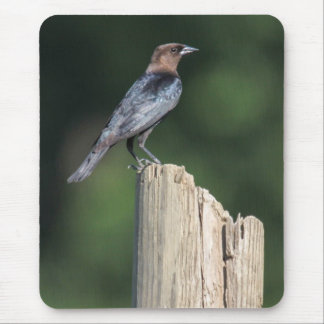 Brown-headed Cowbird Mouse Pad