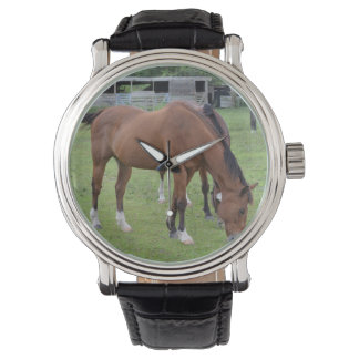 brown horse facing right grazing equine image.JPG Watch