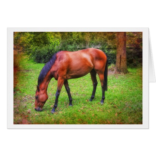 brown horse grazing card