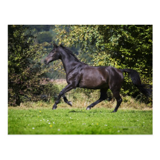 brown horse running on meadow postcard