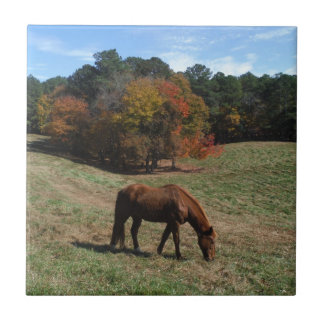 Brown horse with fall trees tile