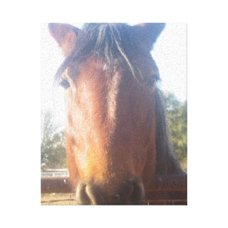 Brown Horsey Love Canvas