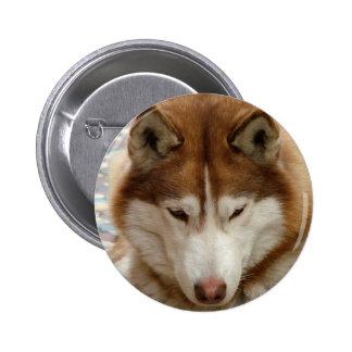 Brown Husky Button