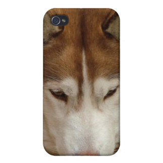 Brown Husky iPhone 4 Case