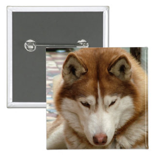 Brown Husky Pin