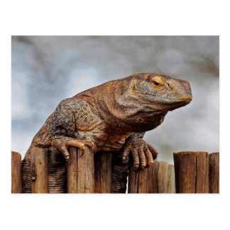 Brown Iguana on Fence Postcard