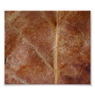 Brown Leaf Leaves Tree Photo Print