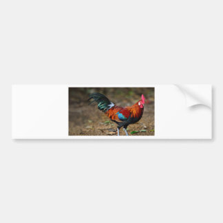Brown Leghorn Rooster Bumper Sticker