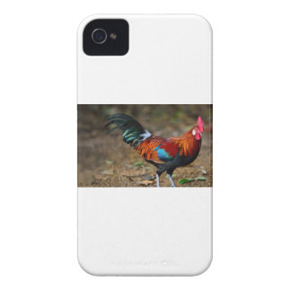Brown Leghorn Rooster iPhone 4 Case