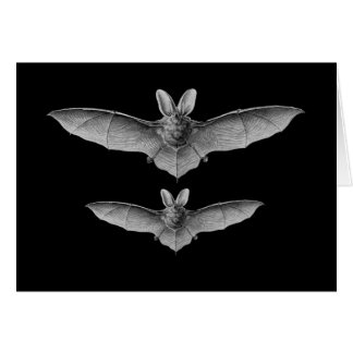Brown & Lesser Long-eared bats Greeting Cards