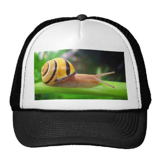 Brown Lipped Snail Cepaea Nemoralis Grove Snail Trucker Hat