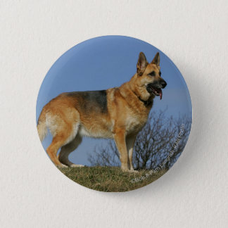 Brown Long Haired German Shepherd 2 2 Inch Round Button