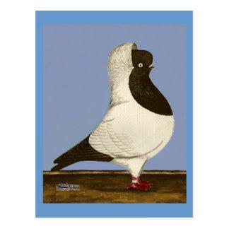 Brown Nun Pigeon Postcard