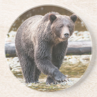 Brown Or Grizzly Bear (Ursus Arctos) Fishing Coaster