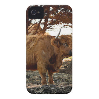 Brown Ox iPhone 4 Covers