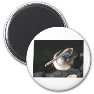Brown Pelican 2 Inch Round Magnet