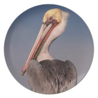 Brown Pelican Birds Wildlife Animals Dinner Plates