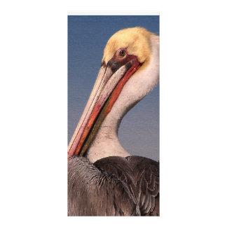 Brown Pelican Birds Wildlife Animals Full Colour Rack Card