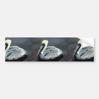 Brown Pelican Bumper Sticker