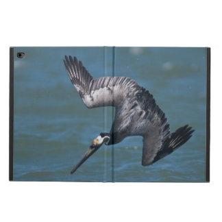 Brown Pelican diving in flight Rockport Texas