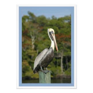 Brown Pelican Photo Art