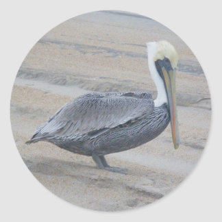 Brown Pelican Stickers