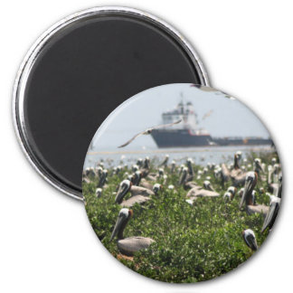 Brown Pelicans Nesting 2 Inch Round Magnet