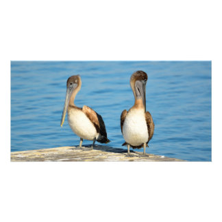 Brown Pelicans on a dock Picture Card