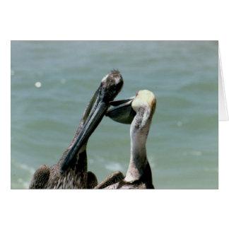 Brown Pelicans Preening Card