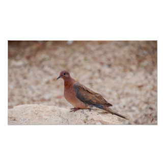 Brown pigeon desert biblical view print