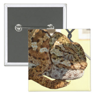 Brown Scaled Chameleon Buttons