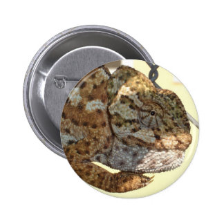 Brown Scaled Chameleon Pinback Buttons