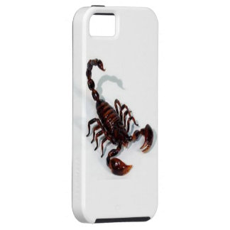 Brown Scorpion,  Case-Mate Vibe iPhone 5 Case