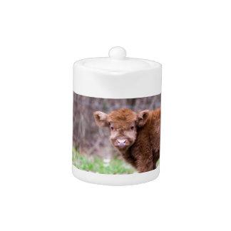 Brown scottish highlander calf in meadow