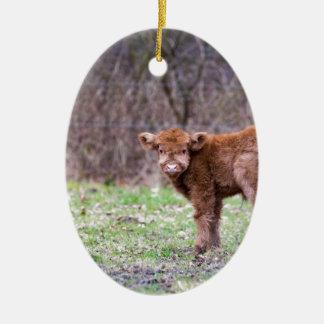 Brown scottish highlander calf in meadow ceramic oval ornament