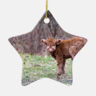 Brown scottish highlander calf in meadow ceramic star ornament